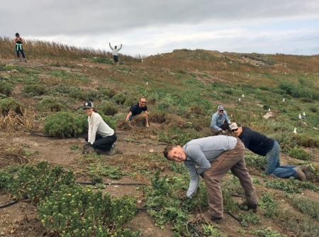 Amazing volunteers and staff dedicate their time to helping CIES remove invasive plant species from the Lighthouse Slope restoration plot on East Anacapa Island.